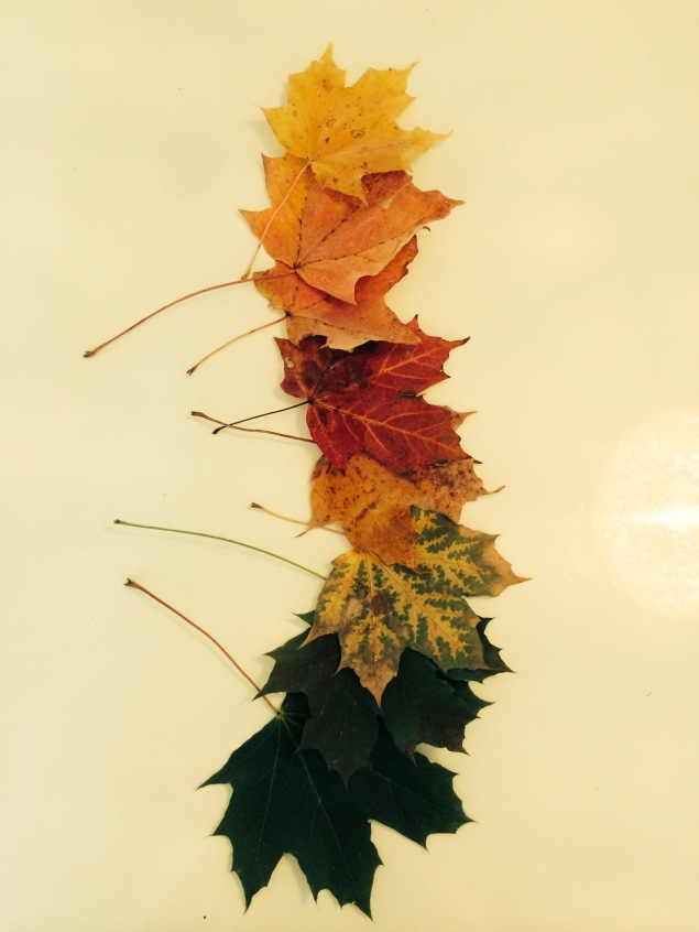 leaf parade -photo