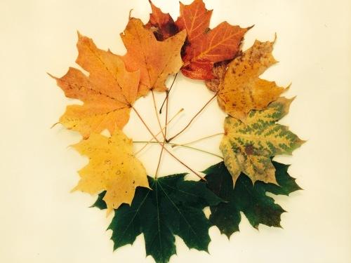 pve - circle leaf photo